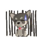 3D チワワフレンズ(個別スタンプ:05)