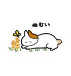 子猫の茶々丸2(個別スタンプ:01)