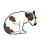 ジャックラッセルテリア-銀じいさん-2-JRT(個別スタンプ:21)