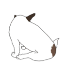 ジャックラッセルテリア-銀じいさん-2-JRT(個別スタンプ:30)