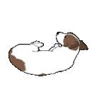 ジャックラッセルテリア-銀じいさん-2-JRT(個別スタンプ:39)