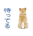 6犬種の日本犬スタンプ(個別スタンプ:02)