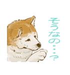 6犬種の日本犬スタンプ(個別スタンプ:03)
