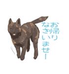 6犬種の日本犬スタンプ(個別スタンプ:08)