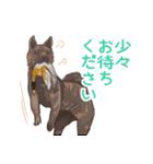 6犬種の日本犬スタンプ(個別スタンプ:11)