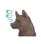 6犬種の日本犬スタンプ(個別スタンプ:12)