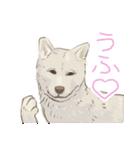 6犬種の日本犬スタンプ(個別スタンプ:13)