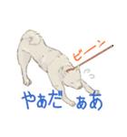 6犬種の日本犬スタンプ(個別スタンプ:16)