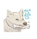 6犬種の日本犬スタンプ(個別スタンプ:18)