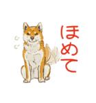 6犬種の日本犬スタンプ(個別スタンプ:21)