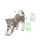 6犬種の日本犬スタンプ(個別スタンプ:26)