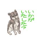 6犬種の日本犬スタンプ(個別スタンプ:28)