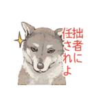 6犬種の日本犬スタンプ(個別スタンプ:29)