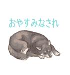 6犬種の日本犬スタンプ(個別スタンプ:30)