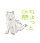 6犬種の日本犬スタンプ(個別スタンプ:32)