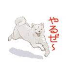 6犬種の日本犬スタンプ(個別スタンプ:33)