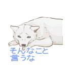 6犬種の日本犬スタンプ(個別スタンプ:34)
