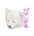 6犬種の日本犬スタンプ(個別スタンプ:35)