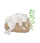 6犬種の日本犬スタンプ(個別スタンプ:36)