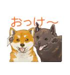 6犬種の日本犬スタンプ(個別スタンプ:37)