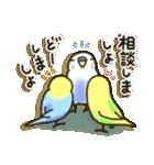 インコちゃん日常パック(個別スタンプ:33)