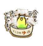 インコちゃん日常パック(個別スタンプ:37)