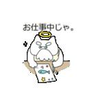 ぽちゃ猫ゴッド