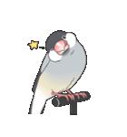 文鳥のスタンプ(個別スタンプ:01)