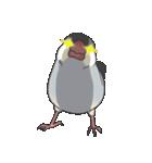 文鳥のスタンプ(個別スタンプ:14)