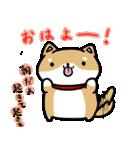 柴犬のしーたん(個別スタンプ:01)
