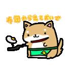 柴犬のしーたん(個別スタンプ:02)
