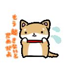 柴犬のしーたん(個別スタンプ:03)