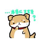 柴犬のしーたん(個別スタンプ:05)