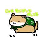 柴犬のしーたん(個別スタンプ:06)