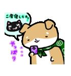 柴犬のしーたん(個別スタンプ:10)