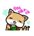 柴犬のしーたん(個別スタンプ:12)