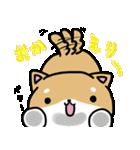 柴犬のしーたん(個別スタンプ:14)