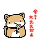 柴犬のしーたん(個別スタンプ:16)