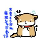 柴犬のしーたん(個別スタンプ:17)