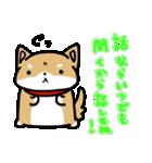 柴犬のしーたん(個別スタンプ:18)