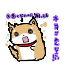 柴犬のしーたん(個別スタンプ:24)