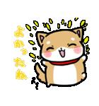 柴犬のしーたん(個別スタンプ:26)