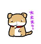 柴犬のしーたん(個別スタンプ:30)