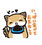 柴犬のしーたん(個別スタンプ:31)