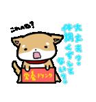 柴犬のしーたん(個別スタンプ:32)