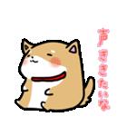 柴犬のしーたん(個別スタンプ:33)