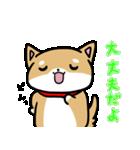柴犬のしーたん(個別スタンプ:35)