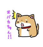 柴犬のしーたん(個別スタンプ:38)