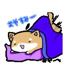 柴犬のしーたん(個別スタンプ:40)