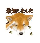 さすが!柴犬(敬語編)(個別スタンプ:06)